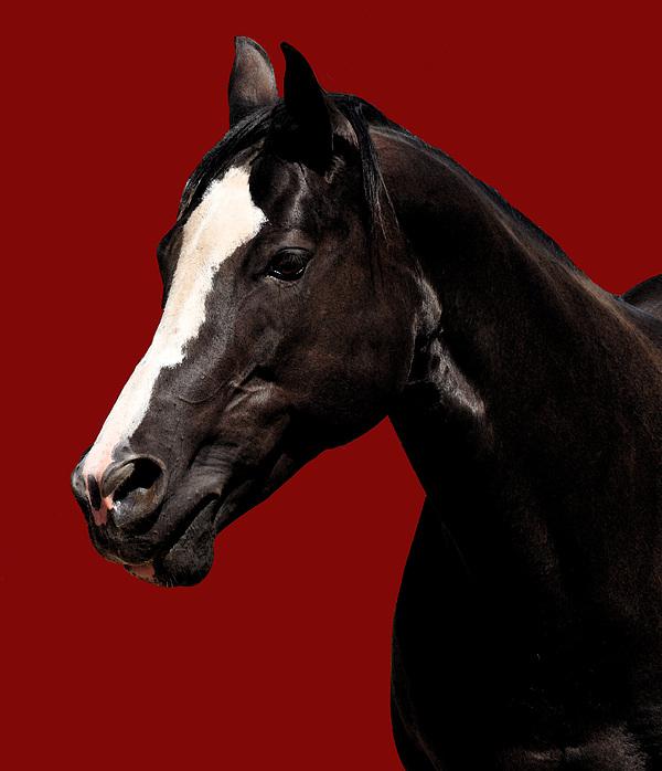 Horse Photograph - Blaze by J DeVereS