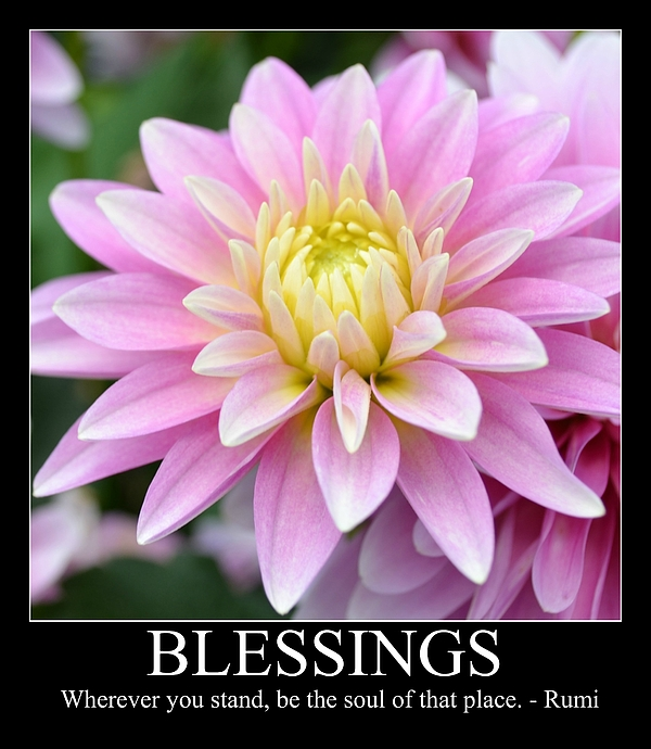 Blessings Photograph - Blessings Dahlia by P S