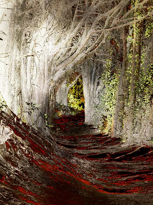 Tree Photograph - Blood Redwoods by Karen  W Meyer