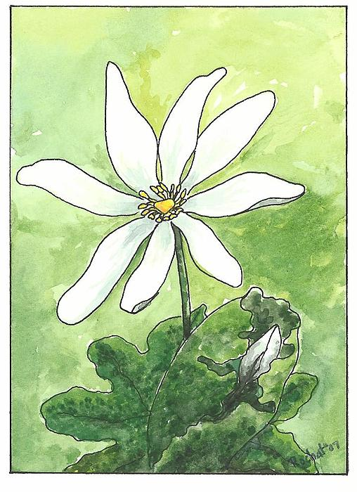 Nature Painting - Bloodroot by Melanie Rochat