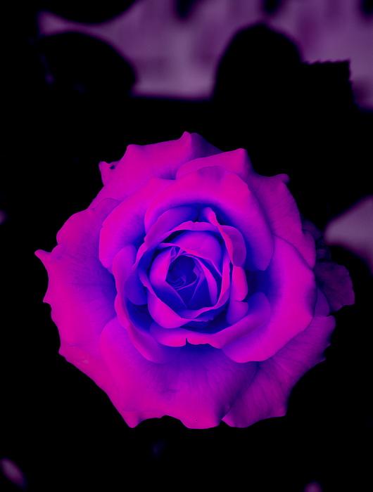 Flower Photograph - Bloom N Love by Debbie May