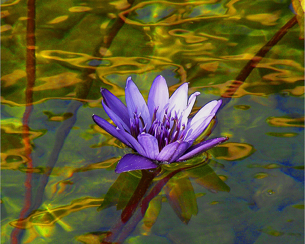 Sacred Photograph - Blooming Into Lifes Peace Dedicated To Toni R. Neal by Sherwanda Irvin