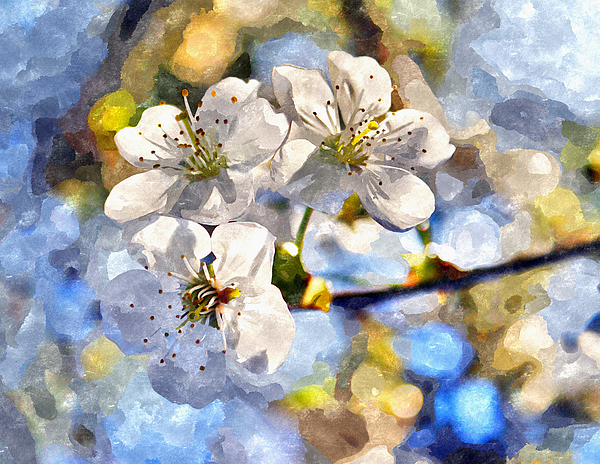 Tree Photograph - Blossoming Cherry And Morning Sunlight Watercolor by Aleksandr Volkov