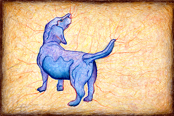 Puppy Drawing - Blue Belly by John Terwilliger