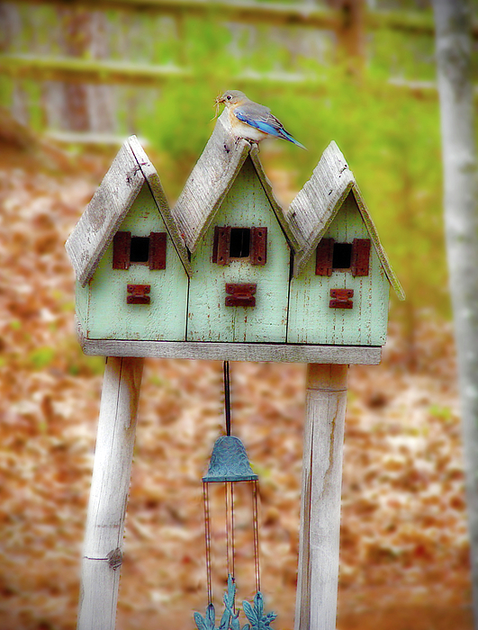 Blue Bird Photograph - Blue Birds Castle by Laura Brightwood