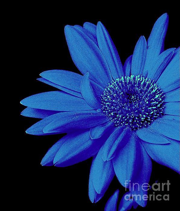 Blue Photograph - Blue by Elfriede Fulda