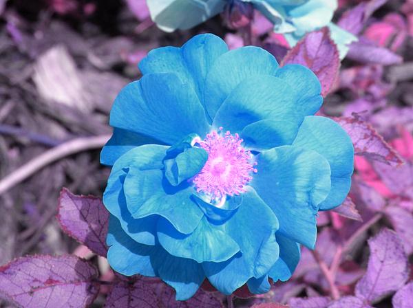 Blue Photograph - Blue by Evan Pullins