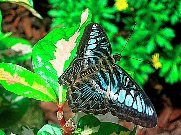 Photograph Photograph - Blue Flight Photography by Mario Perez