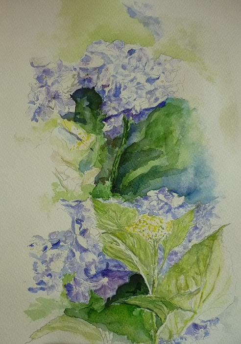 Flower Painting - Blue Hydrangea by Lizzy Forrester