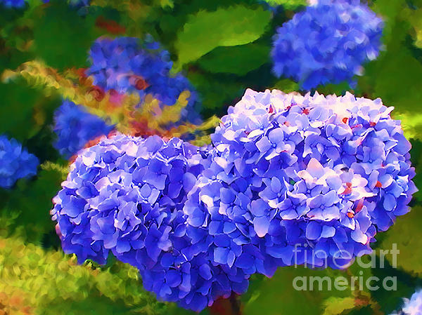 Blue Hydrangea Painting - Blue Hydrangea by Methune Hively
