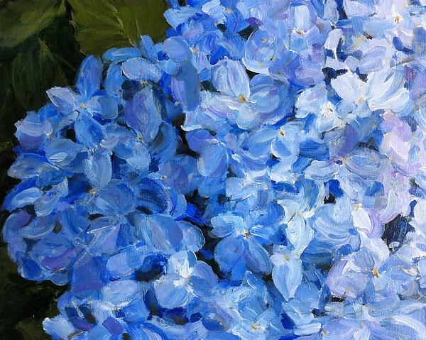 Thomas Dreesen - Blue Hydrangea
