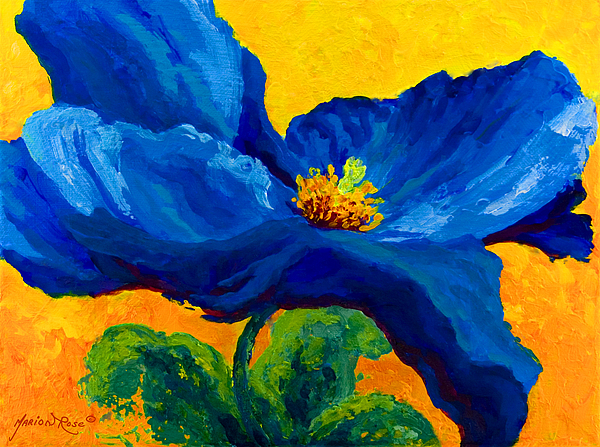 Blue poppy painting by marion rose poppies painting blue poppy by marion rose mightylinksfo