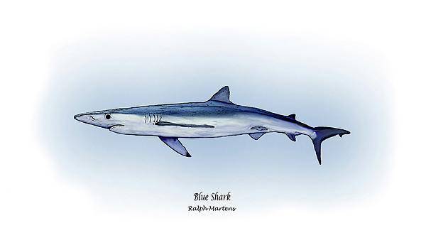 Blue Shark Painting - Blue Shark  by Ralph Martens