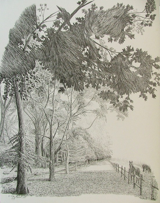 Kentucky Drawing - Bluegrass Fog by Dan Hausel