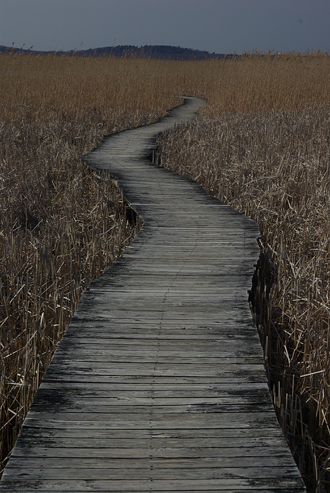 Landscape Photograph - Boardwalk by Eric Workman