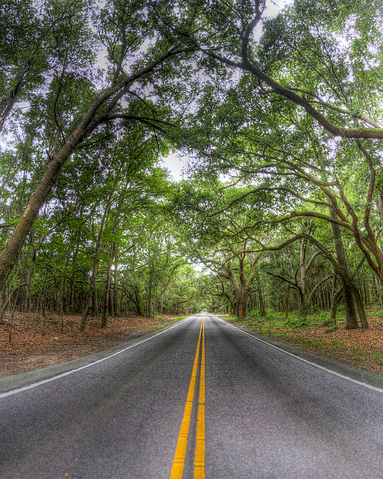 Johns Island Photograph - Bohicket Road Johns Island South Carolina by Dustin K Ryan