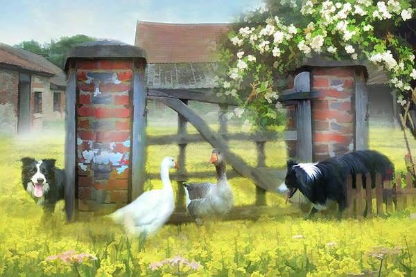 Dog Digital Art - Border Patrol  by Trudi Simmonds