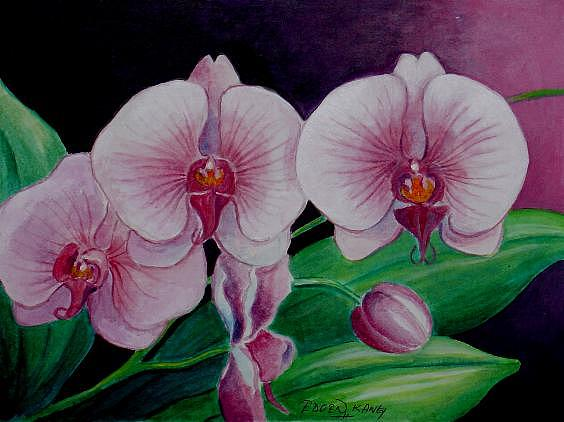 simple orchids paintings - 564×422
