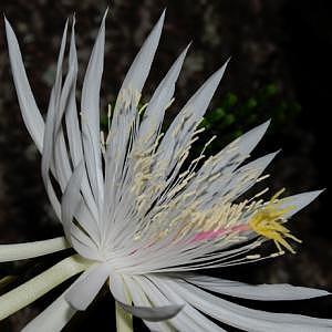 Botanicals Photograph by David Zapata