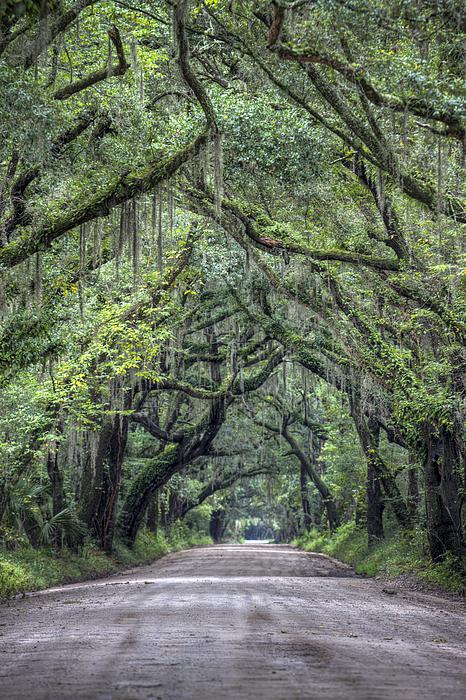 Botany Bay Country Road Photograph - Botany Bay Country Road by Dustin K Ryan