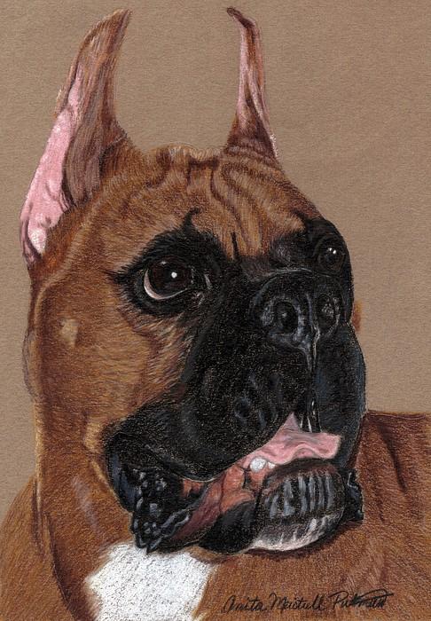Dog Drawing - Boxer Vignette by Anita Putman