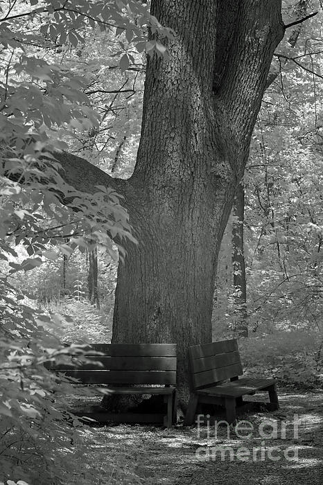 Steve Gass - Branches and Benches