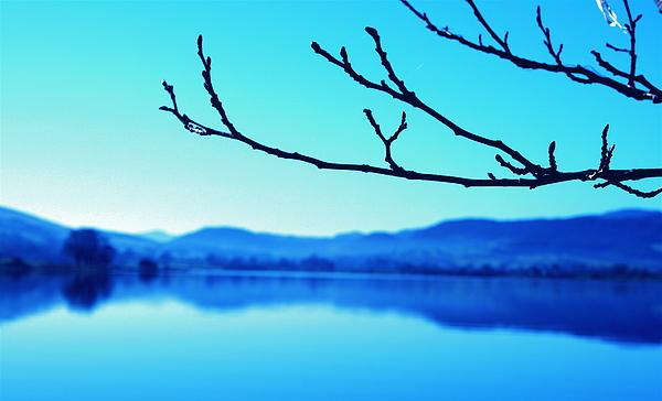 Lake Photograph - Branches by Stephen Walton