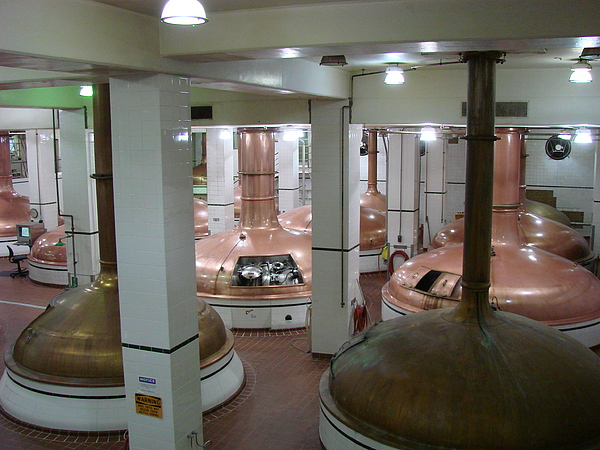 Beer Photograph - Brewing Beer by Wayne Whitney