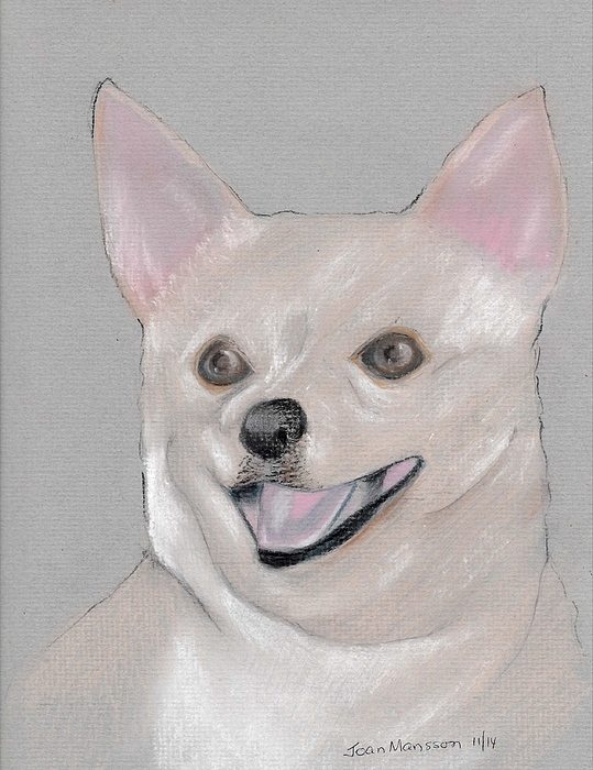 Chihuaha Pastel - Brewster by Joan Mansson