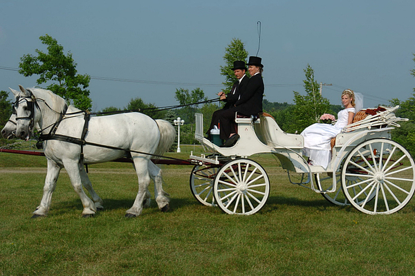Carriage Photograph - Bridal Carriage by Mary Curtis