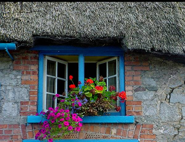 Adare Photograph - Bright Blooms by PJ  Cloud
