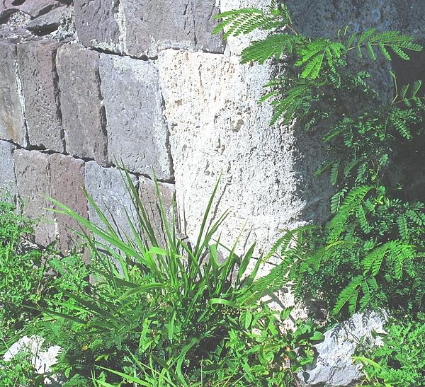 Brimstone Photograph - Brimstone Wall by Ian  MacDonald