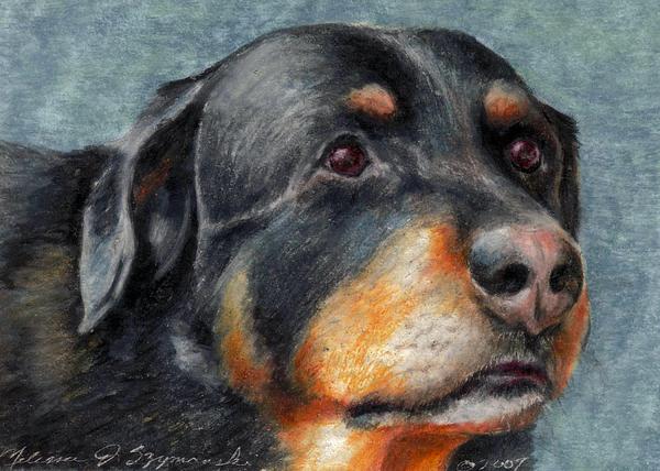 Rottweiler Drawing - Brody by Melissa J Szymanski