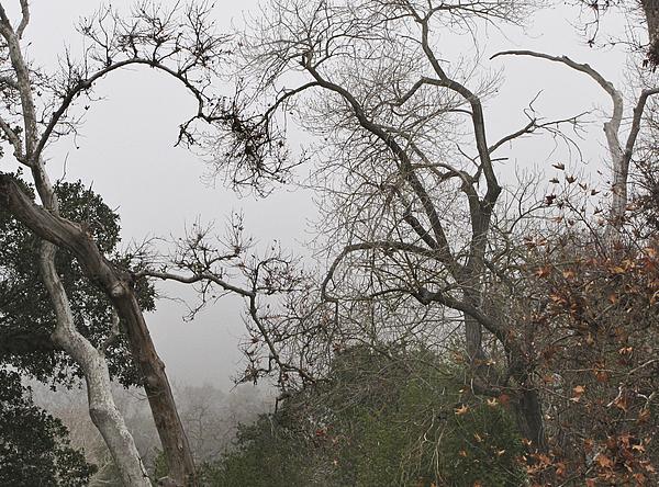 Fog Photograph - Broken Heart In  Fog by Karen  W Meyer