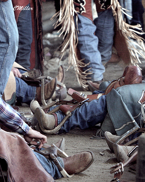 Rodeo Photograph - Bronc Rider Row.. by Carol Miller