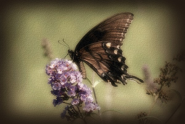 Butterfly Photograph - Brown And Beautiful by Sandy Keeton