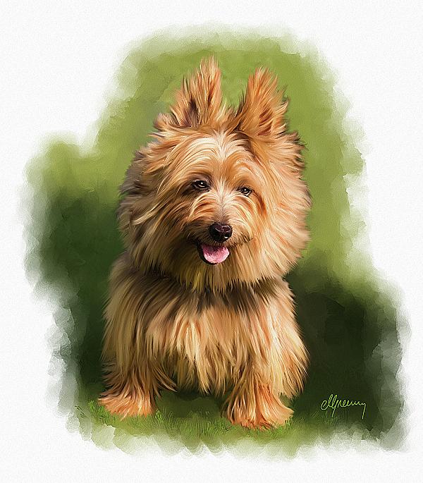 West Highland Terrier Brown Brown Cairn West...