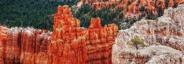 Landscape Photograph - Bryce Canyon - Lone Tree by Bob Coates