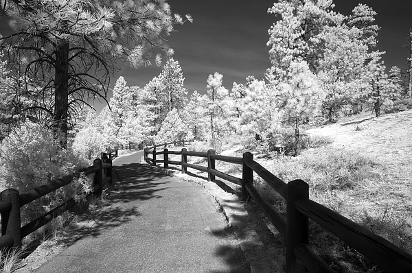 Infrared Photograph - Bryce Canyon Trail by Mike Irwin