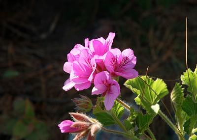 Flower Photograph - Bs Best Flower by Brenda Starr