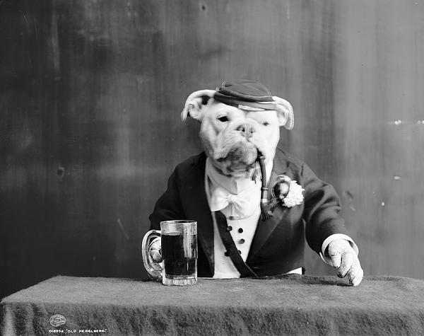1905 Photograph - Bulldog, C1905 by Granger