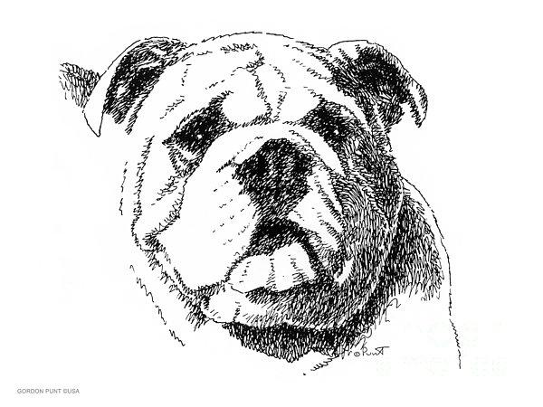 Bulldog Drawing - Bulldog-portrait-drawing by Gordon Punt
