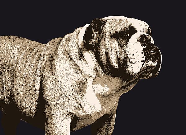 Bulldog Digital Art - Bulldog Spirit by Michael Tompsett