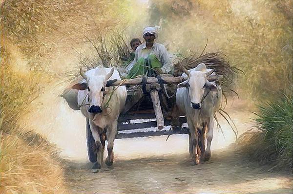 Landscape Digital Art - Bullock Cart by Shreeharsha Kulkarni