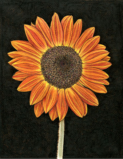 Flower Painting - Burnt Orange Sunflower by Cate McCauley