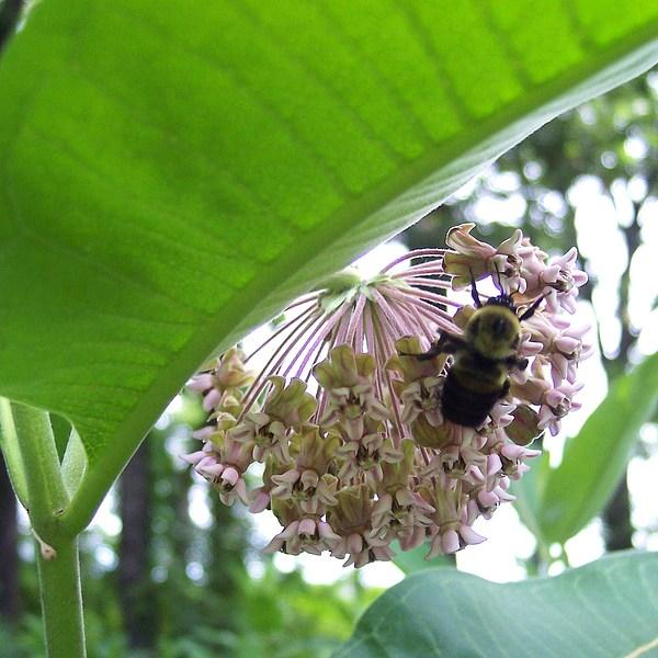Busy As A Bee Photograph by Anna Villarreal Garbis