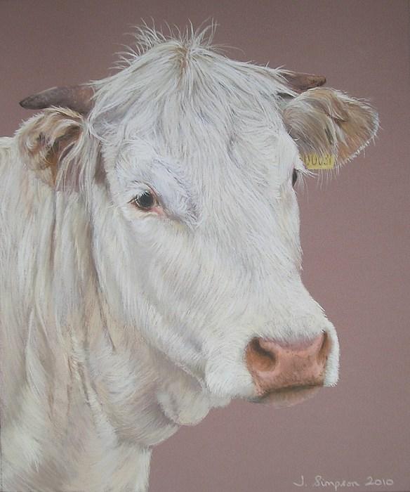 Cattle Pastel - Buttercup by Joanne Simpson