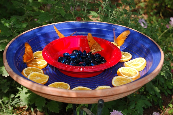 Butterfly Photograph - Butterflies Enjoying A Meal by Susan Heller