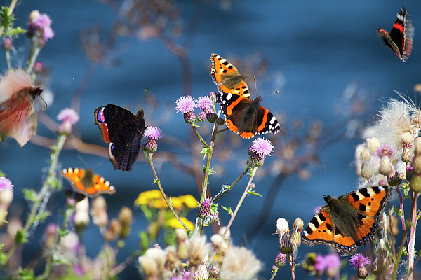 Horizontal Photograph - Butterflies Sitting On Flower by www.WM ArtPhoto.se