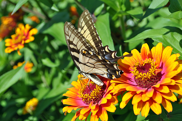 Nature Photography Photograph - Butterfly Beauty by Dion Baker